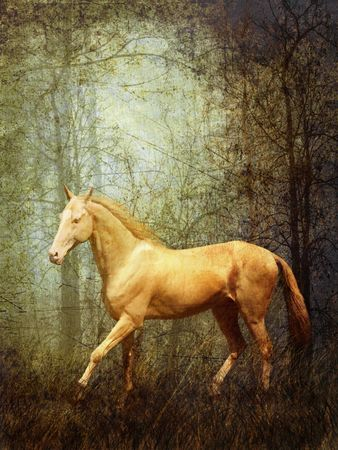 Cremello stallion Akhal-Teke in mystical forest