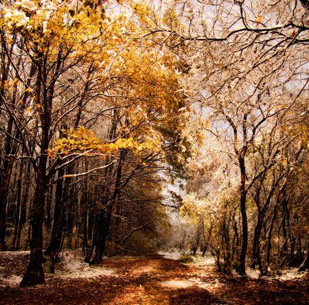 最初の雪の下で秋の森