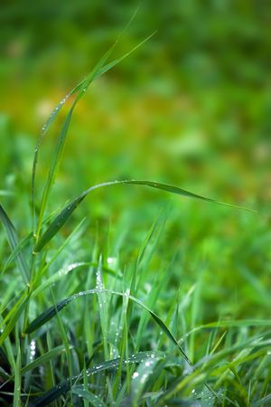 Close-up of green grass in morning dew in a garden Stock Photo - 5377802