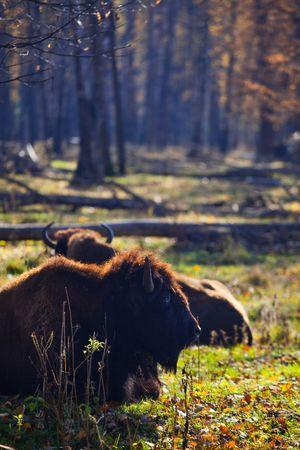 biosphere: Prioksko-Terrasny Nature Biosphere Reserve in Serpukhov District, Russia
