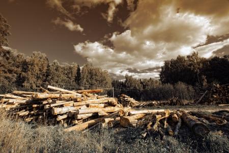 夏の森でのログ 写真素材