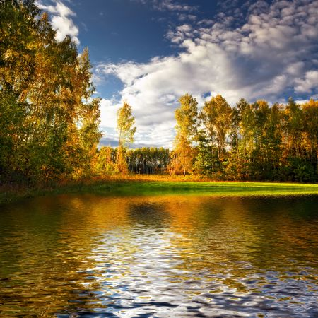 Beautiful landscape with summer forest and lake