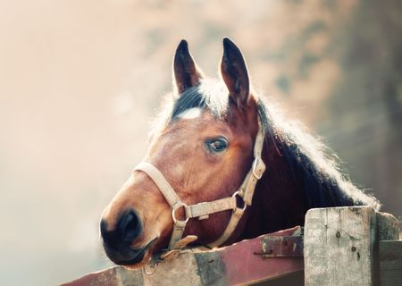 Portrait of beautiful brown horse in the spring sunshine photo