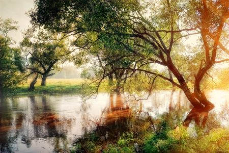 Morning forest river and birches in gold fog Standard-Bild