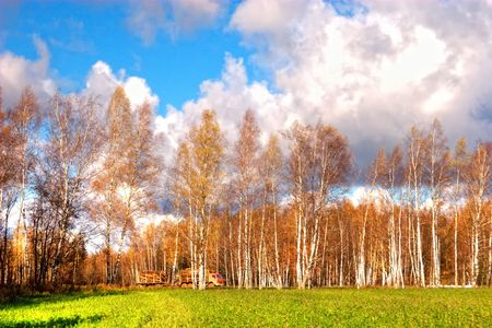 Panorama of forest in a sunny summer day photo