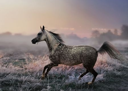 Running horse at Misty morning photo