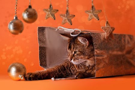 Somali cat sitting inside brilliant bag under a christmas tree. Playing with baubles photo
