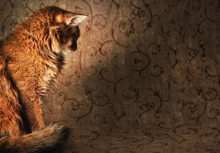 Somali cat on vintage wallpapers