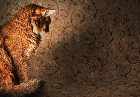 Somali cat on vintage wallpapers