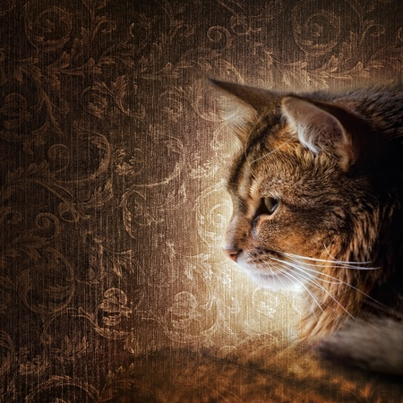 rudy: Somali cat portrait Stock Photo
