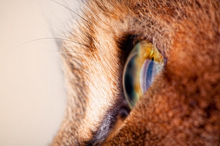 rudy: close-up of cats eye