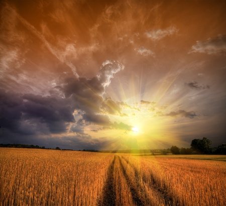 Rural landscape with wheat field on sunset photo