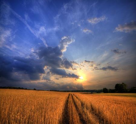 Rurale landschap met tarweveld op zonsondergang