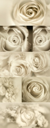 Roses Collage from photos in sepia photo