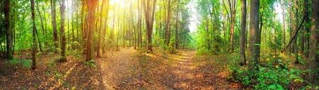 Panorama van een gemengd bos op zonnige zomerdag