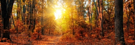 Panorama of a mixed forest at autumn sunny day Imagens