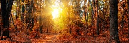 Panorama van een gemengd bos bij de herfst zonnige dag