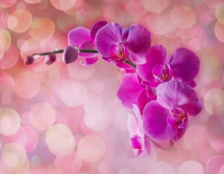 Orchid flowers on blurred pink background Stock Photo - 9613776