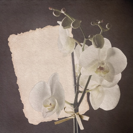 vintage card with orchid in sepia color photo