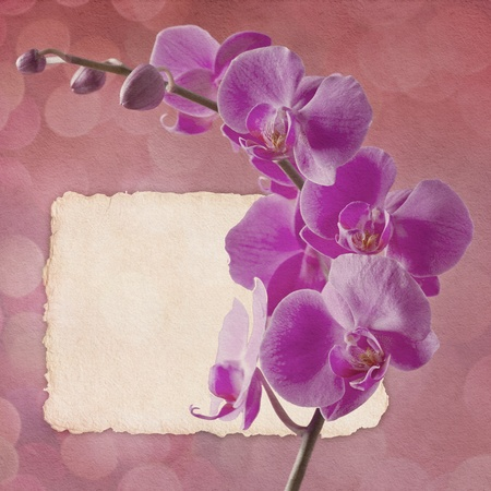 vintage card with orchid in pink colors photo