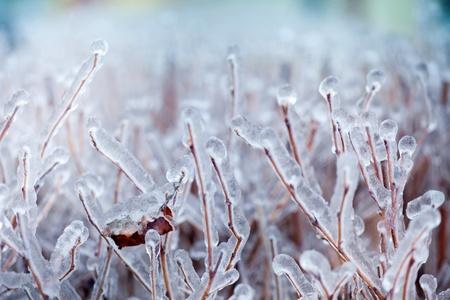겨울에 나무에 얼음의 근접