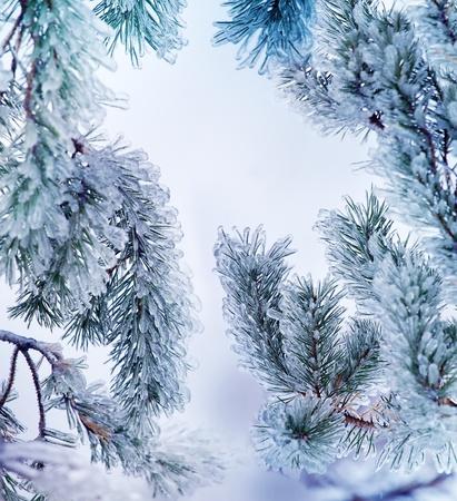 Close-up van het ijs op een pijnboom in de winter. Xmas kader