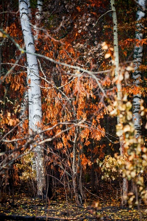 smother: Mixed forest after fire at sunny day