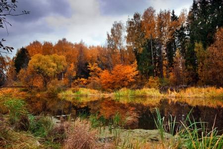 秋の森の湖を風景します。
