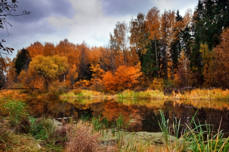 Landscape with forest lake in autumn Imagens