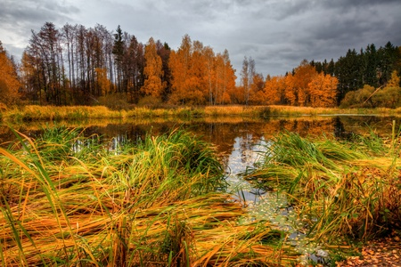 Landscape with forest lake in autumn photo
