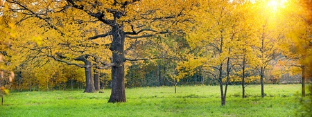 Panorama of a mixed forest with oak in autumn sunny day Stock Photo