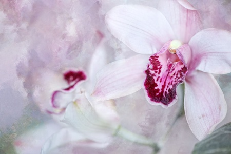 Orchid on pastel colored background Stock Photo