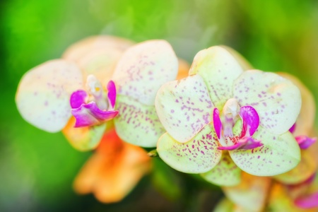 spotted flower: Branch of green orchid flower in glasshouse Stock Photo