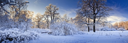 Winter panorama of a park under snow at sunny day