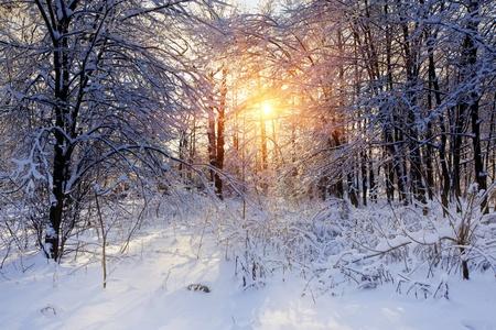 Winter panorama van een park onder de sneeuw bij zonnige dag Stockfoto