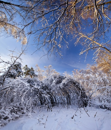 Winter panorama of a park under snow at sunny day photo
