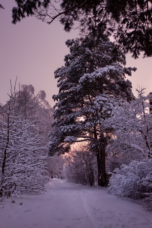 Winter park under snow at sunset Stock Photo - 11354234