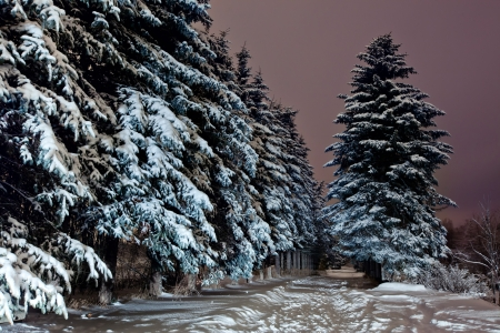 Park van de winter onder de sneeuw op de late avond