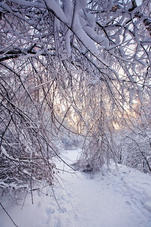 christmas scenic: Winter park under snow at sunny evening  Stock Photo