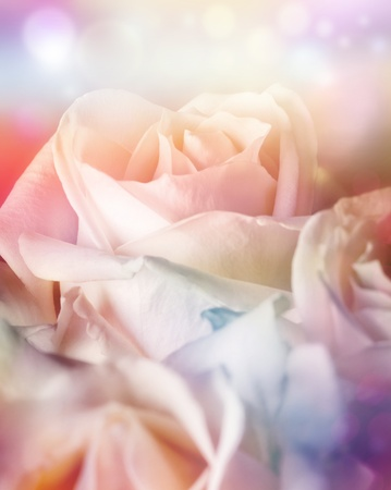 Peach roses on soft background with bokeh in watercolor look photo