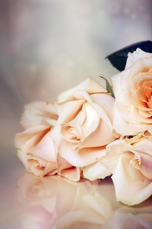 Peach roses on soft background with bokeh in watercolor look Stock Photo - 11473265