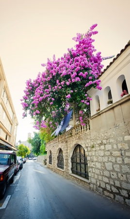 Street with violet oleander in coastal town Herceg Novi in Montenegro photo