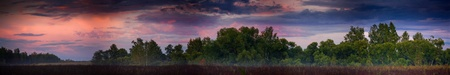 Panoramic landscape with forest on sunset photo