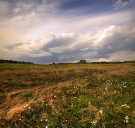 Summer landscape at windy day photo