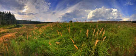 Summer panoramic landscape at windy day photo