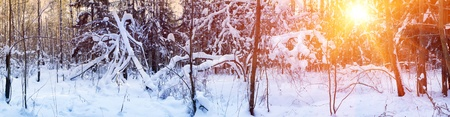Winter forest under snow in sunny day