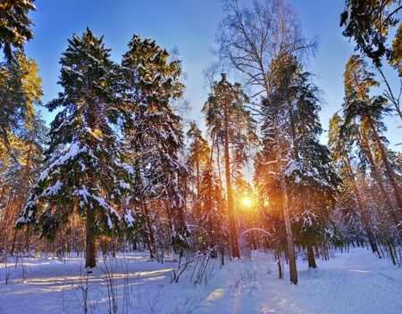 Winter forest under snow in sunny day photo