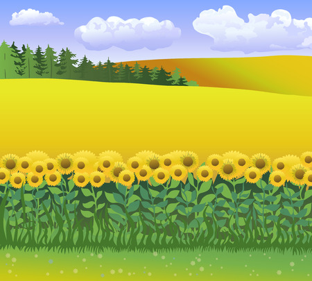 clearing: Vector nature illustration with grass, field of sunflowers and blue sky with clouds. World environments day.