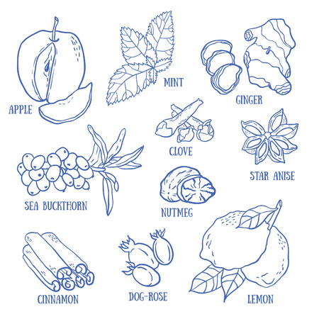 ginger root: Set of spices, berries and fruits for autumn beverages. Vector hand drawn illustration.