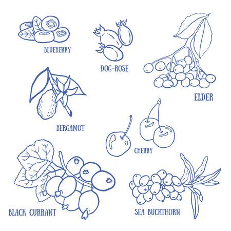 Set of berries for autumn beverages. Vector hand drawn illustration. Illustration